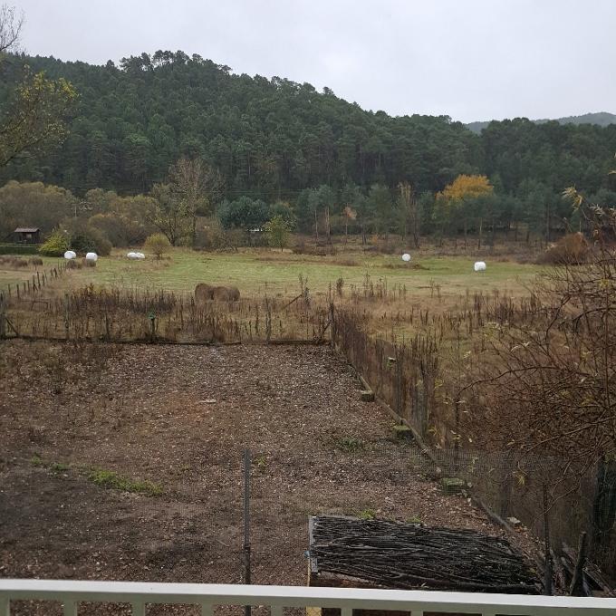 La Lobita (Vista de los pinares desde el comedor)